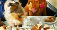 pet friendly restaurants tampa